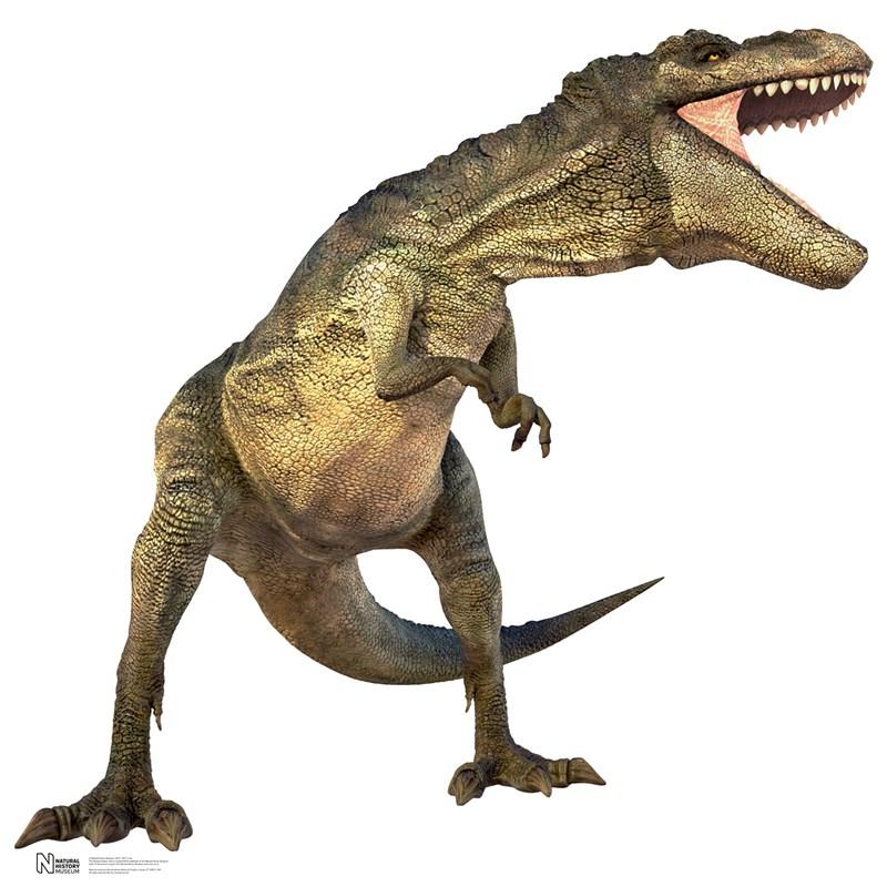 T Rex Dinosaur Cardboard Cutout Poster  T Rex Cardboard Cutout