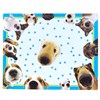 THE DOG Activity Placemats