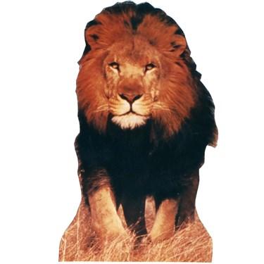 Lion Standup