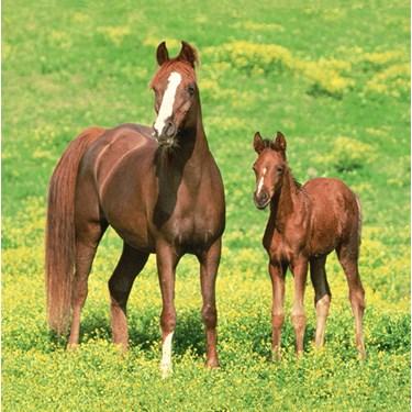 Wild Horses Lunch Napkins